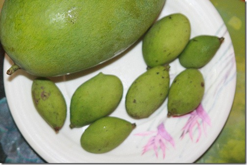 paho compared to mango